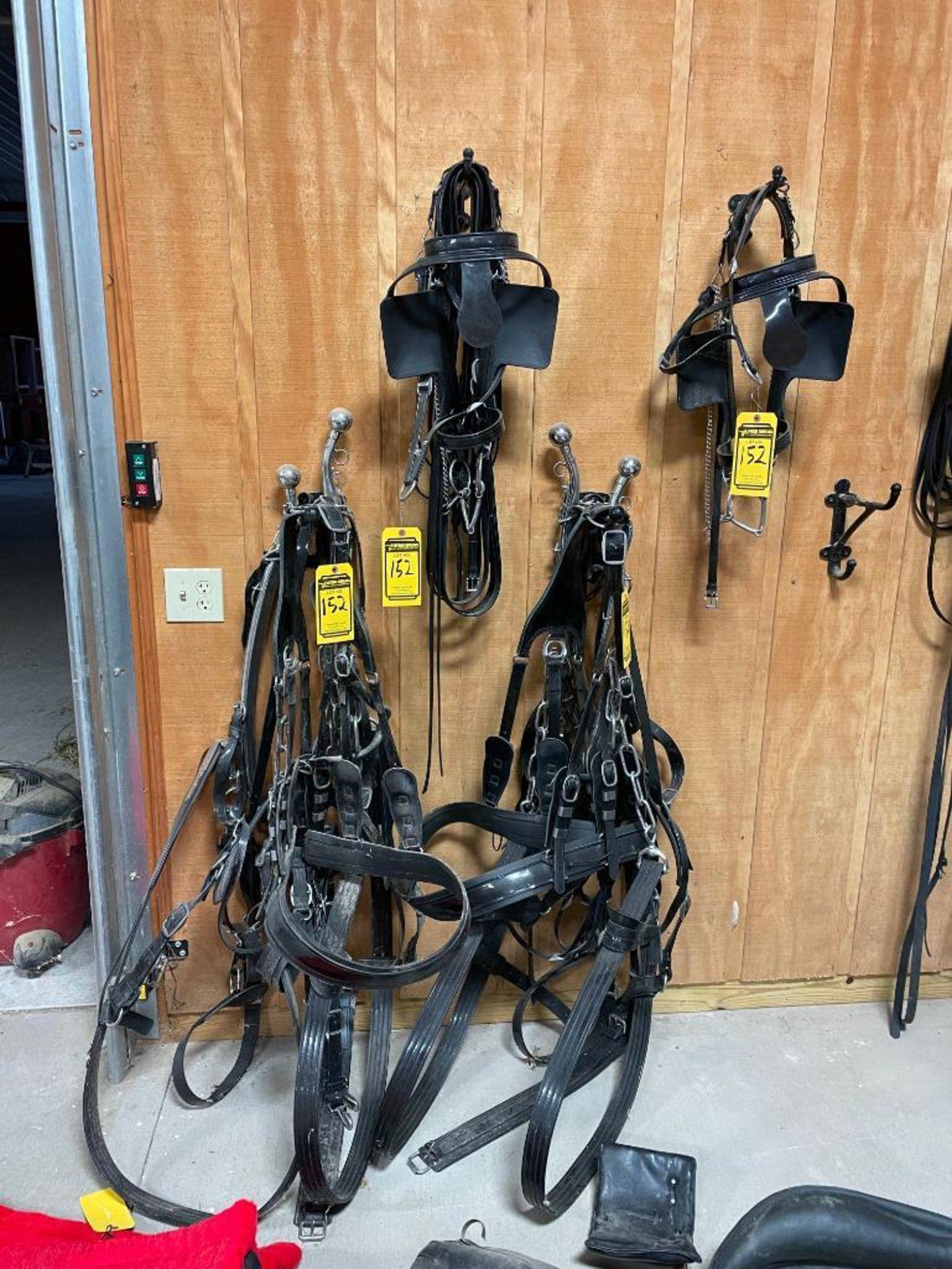 Amish Made Team Set of (2) Brahma Webb Breast Pull Type Draft Harnesses, 64'' - 102'' girth, 24''