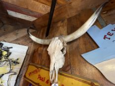"""Wall Mounted Steer Skull Approx. 46""""W x 20""""H"""