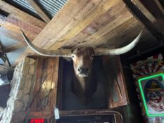 """Wall Mounted Taxidermy Steer 60""""W x 36""""D x 36""""H (Dimensions Approx.)"""