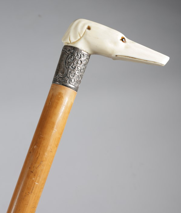 A late Victorian ivory handled walking cane, the handle in the form of a greyhound or whippet's