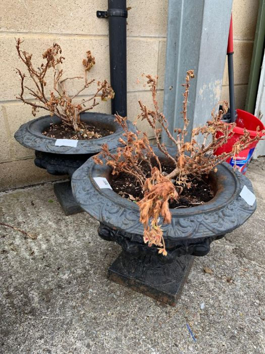 Pair of carved metal garden planters with various - Image 2 of 2