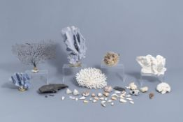 A beautiful collection of shells and sea finds, various origins