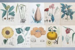Raimondo Petraroja (19th C.): An interesting series of ten botanical hand-coloured lithographs