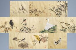 Chinese school, ink and colours on silk, 19th/20th C.: Ten paintings of birds between blossoms