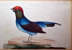 After Richard Polydore Nodder (1795-1820) Set of eight coloured engravings Various exotic birds,