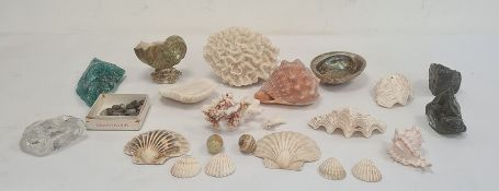 Quantity of large decorative shells and coral pieces
