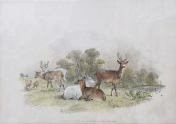 Two coloured lithographs Deer, published by S & J Fuller at their Sporting Gallery, 34 Rathbone