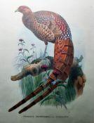 "Pair of colour prints ""Phafianus Soemmerringi, Var.Scintillans"" and ""Calophaasis Ellioti"", 40.5cm x"