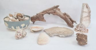 Conch shell, other shells, driftwood, etc (1 box)