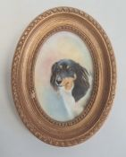 Painted porcelain plaque, oval, head and shoulders study of a dog 'Amber' by E R Booth, ex Royal