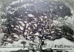 "Carla Randall Etching and aquatint ""Oak Tree"", no.9/50, signed in pencil, 26cm x 34cm"