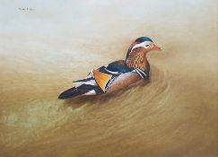 Michael Sawdy (20th century) Oil on board Mandarin duck Signed top left 43cm x 59.5cmCondition