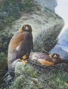 """David Johnston Watercolour drawing """"Golden Eagle at the Nest"""", Dunkeld, Perthshire Gallery label"""