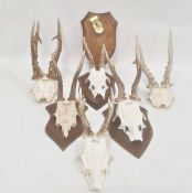 Set of four miniature deer horns,each mounted on oak shield and two pairs unmounted (6)