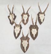 Set of six German miniature deer horns each mounted on an oak shield, various sizes, approx. 30cm