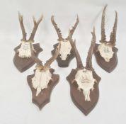 Set of five German miniature deer horns, each mounted on oak shield, approx. 35cm and smaller