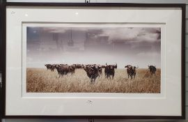 Martin Osner (1963 -) Fine Art Photography Limited edition colour photograph Buffalo in the Veldt,