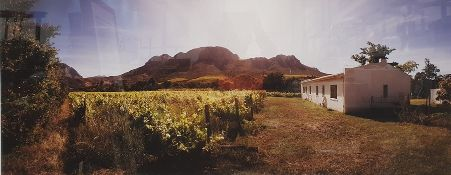 Martin Osner (1963-) - Fine Art Photography Limited Edition colour photograph Rural vineyard in