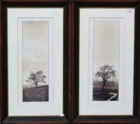 Set of four photographic prints of trees in landscapes, 55cm x 22cm (4)