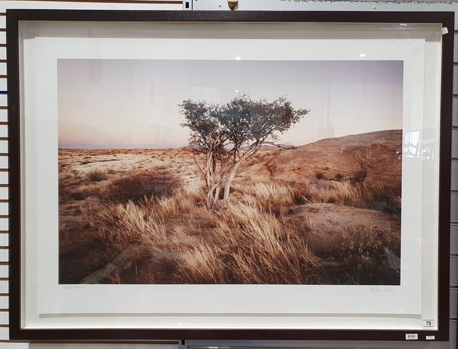 Large photographic print of a tree, titled 'Klein Tinkas' and signed in pencil indistinctly ' - Image 2 of 4