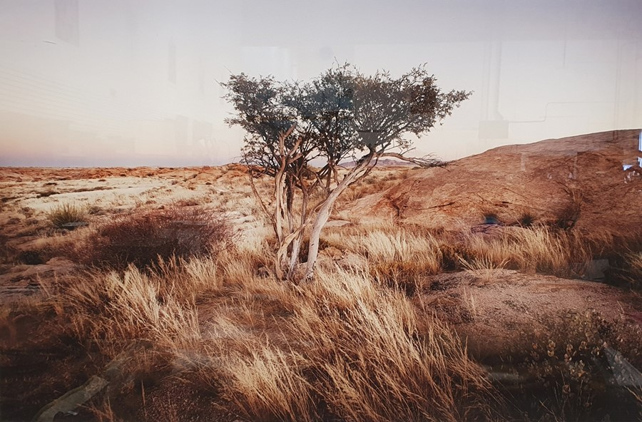 Large photographic print of a tree, titled 'Klein Tinkas' and signed in pencil indistinctly '