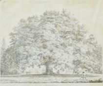 Four large reproduction prints of famous trees, including The Bands Park Oak and The Chandos Oak,