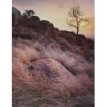 Photographic print of a rocky landscape, titled 'Tree Rock Grass', API and signed 'Eugene Von De
