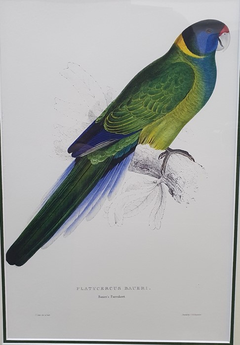 After Edward Lear Set of five coloured prints of parrots, framed to match, and Algernon Talmage - Image 4 of 7