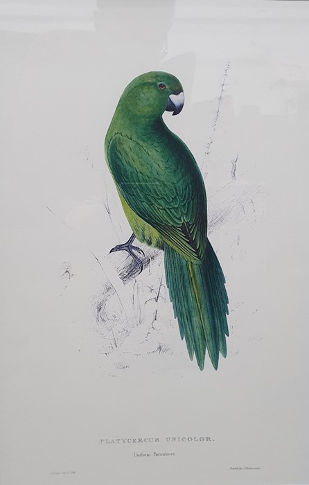 After Edward Lear Set of five coloured prints of parrots, framed to match, and Algernon Talmage - Image 5 of 7