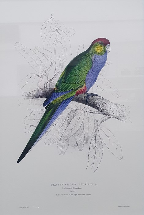 After Edward Lear Set of five coloured prints of parrots, framed to match, and Algernon Talmage