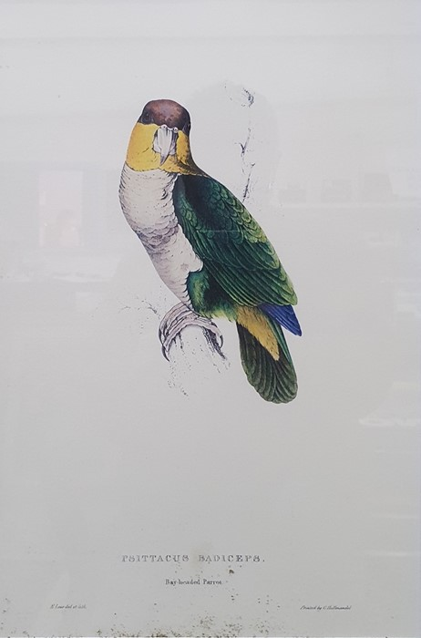 After Edward Lear Set of five coloured prints of parrots, framed to match, and Algernon Talmage - Image 3 of 7