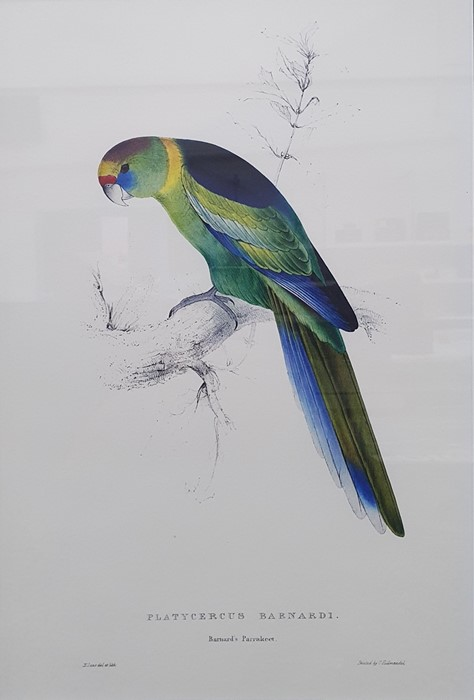 After Edward Lear Set of five coloured prints of parrots, framed to match, and Algernon Talmage - Image 2 of 7
