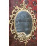 Modern oval mirror in gold coloured sprayed acanthus leaf moulded frame, 83cm x 52cm