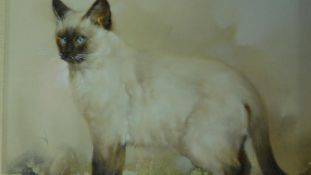 A gilt framed oil on canvas of a Siamese cat, indistinctly signed. 58x68cm