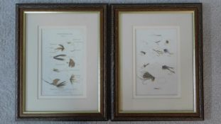 A pair of framed and glazed prints, various fly ties. 35x28cm
