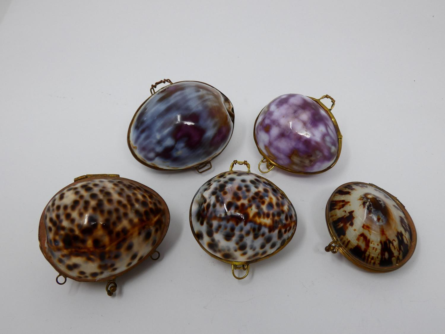 A collection of hinged sea shell trinket boxes. Four made from polished cowrie shells and one made