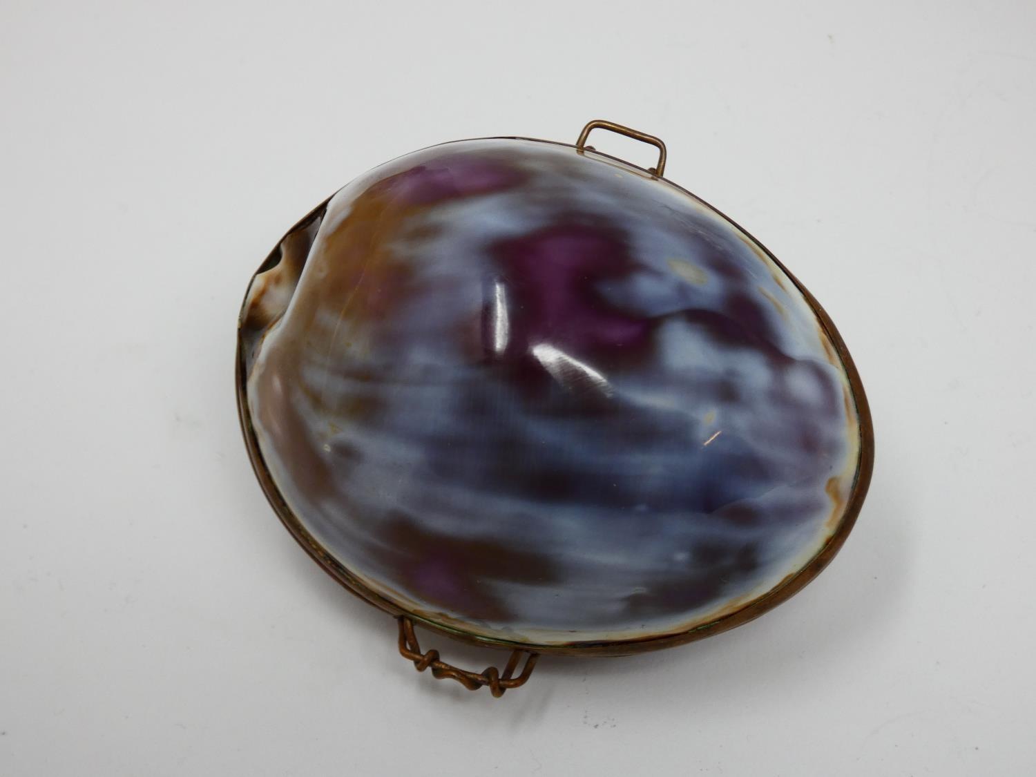 A collection of hinged sea shell trinket boxes. Four made from polished cowrie shells and one made - Image 4 of 8