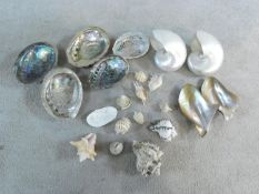 A collection of exotic seashells. Icluding two large pearl Nautilus shells, five Abalone shells, a