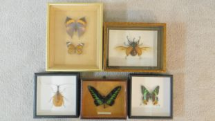 A miscellaneous collection of framed and cased taxidermied butterflies and beetles to include a