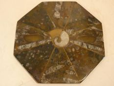 A polished ammonite and fossilized shell board with brass stringing and central brass inlaid
