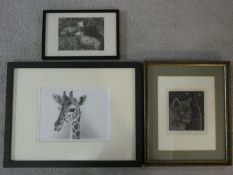 A charcoal drawing of a giraffe and two framed and glazed limited edition engravings, cat and sheep,