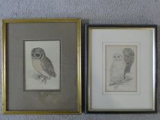 A framed and glazed watercolour sketch of a Tawny Owl, monogrammed and a print of Snowy Owls. H.