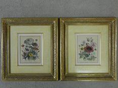 Two gilt framed and glazed antique hand coloured engraved botanical book plates by Jane Webb