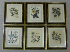 Six late 18th/early 19th century black gilt japanned framed and glazed hand coloured engraved