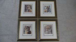 Ian Nathan (b.1954) four signed, framed and glazed limited edition prints, Puma Cub, Lion Cub, Tiger