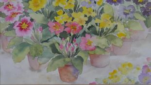 A framed and glazed watercolour, Polyanthus, indistinctly signed. H.54 W.63.5cm
