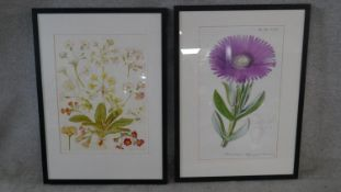 Two framed and glazed contemporary botanical prints. Depicting various species of flower. H.73 W.