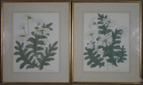 A pair of framed and glazed watercolours, flower studies, signed and dated, Ursula Smith. H.74.5 W.