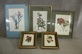 Five framed and glazed botanical prints. Including two gilt framed studies of camellias, species