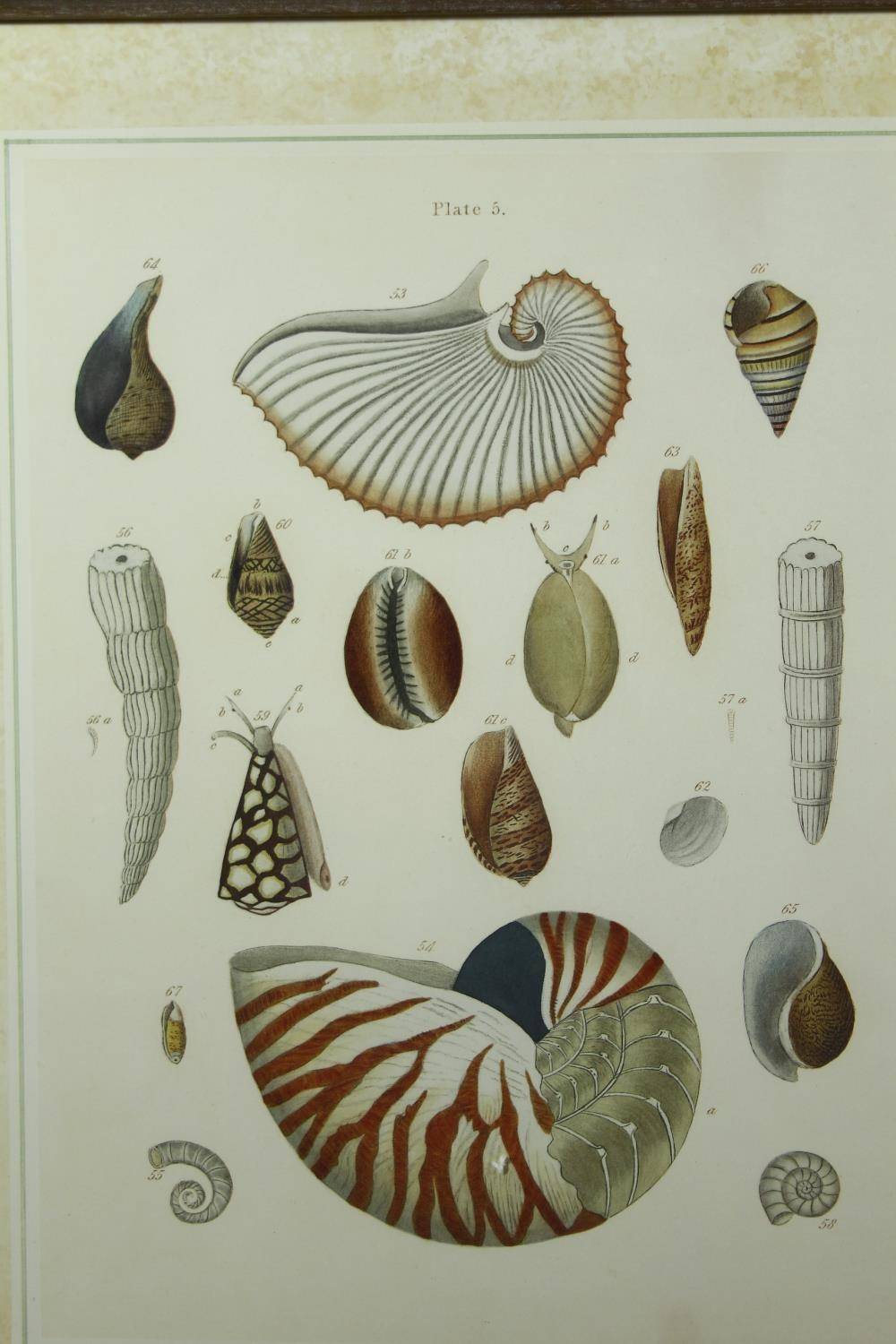Three framed and glazed contemporary prints of coloured book plates of various species of tropical - Image 4 of 5